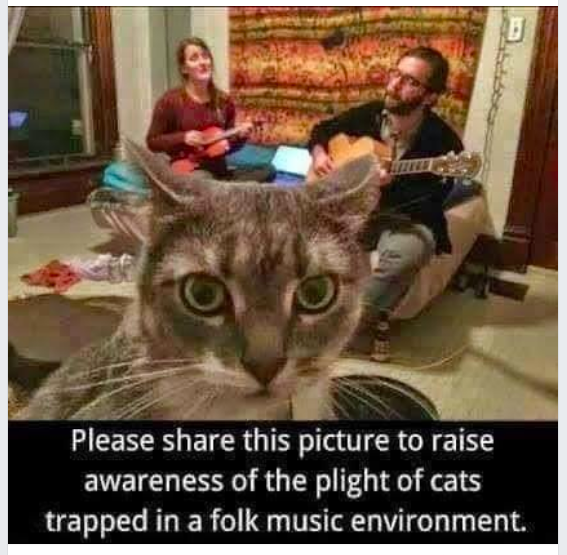 Cats and Bluegrass.png