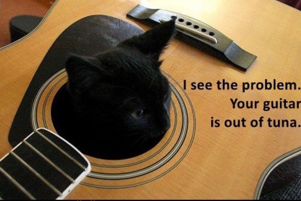 cat guitar.png