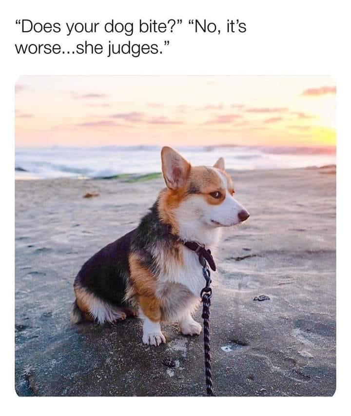 dog judges.JPG