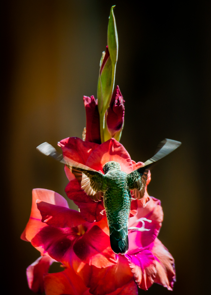 hummingbirds-1-2.jpg